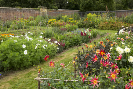 The walled garden in July at Scotney Castle