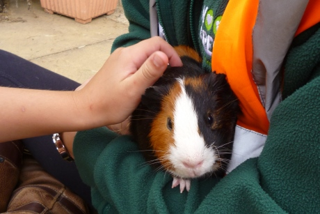 Pupils can get hands-on with companion pets at Wood Green