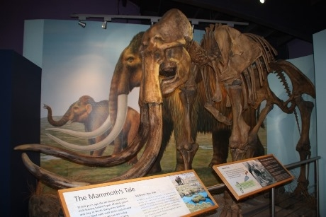 Mammoth bones at the centre