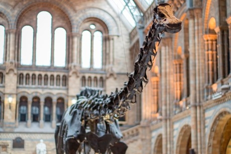 Dippy%2C Natural History Museum