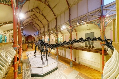 Dippy at Dorset County Museum
